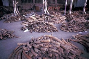 EIA archive shot of stockpile of ivory seizures in Dar Es Salaam, Tanzania