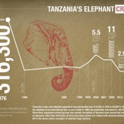 Tanzania in denial & still trying to spin elephant poaching crisis
