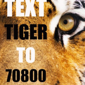 Join in with Tiger Tracks, the world's biggest tiger event!