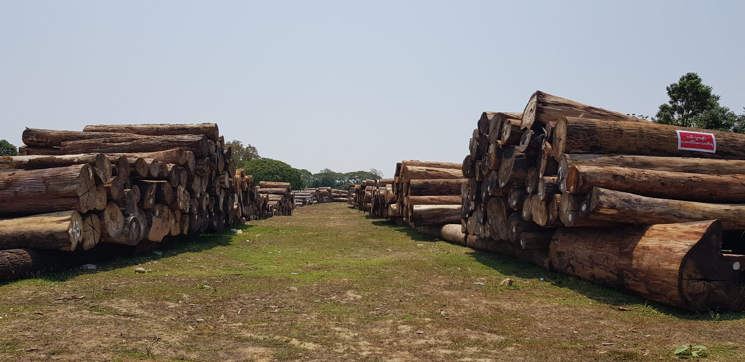 Timber seized in Kachin in May 2020
