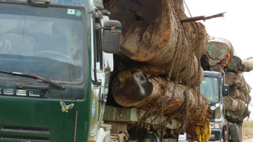 Trucks carrying illegal timber