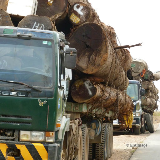 Transporting illegal timber in Vietnam