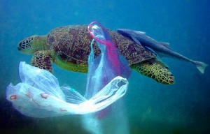 Turtle_plastic bag