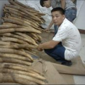 Chinese town at the centre of global ivory smuggling