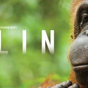 EIA short documentary Ulin wins at forests film festival