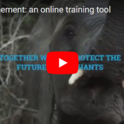 Tackling the illegal ivory trade: an online training tool for enforcement
