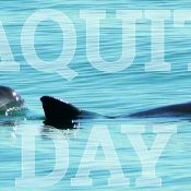 If we're serious about saving it, actions not platitudes are vital on Save Vaquita Day