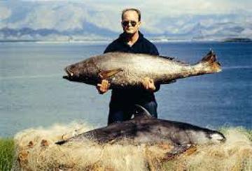 Vaquita and totoaba (c) NOAA Fisheries