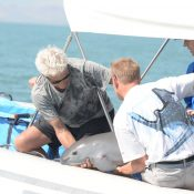 Bleak outlook for the vaquita as operation starts to capture them in the wild