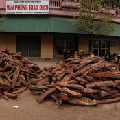 UN must censure Vietnam for using fraudulent CITES permits to trade stolen rosewoods
