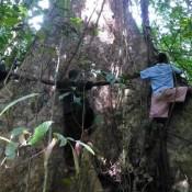Indonesian Govt's sly U-turn on plans to destroy Aru islands