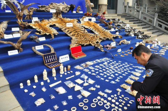Yunnan Forest Police showcase wildlife products seized in 2013, via Chinanews dot com