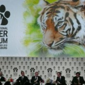 Could this really be the Year of the Tiger? Debbie Banks on the International Tiger Forum
