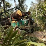 EIA responds to Vietnam wood industry over criticisms of timber crime exposé