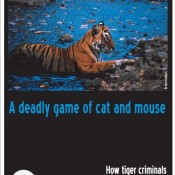 A Deadly Game Of Cat And Mouse