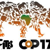 EIA at CITES CoP17 to seek protections for key species