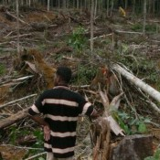 Norwegian cancellation of investment in Malaysian logger highlights need for review of wider investments in deforestation operations