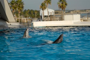 Dolphins perform in a Japanese aquarium (c) EIA
