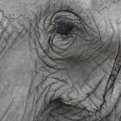World Elephant Day – time for global action beyond words