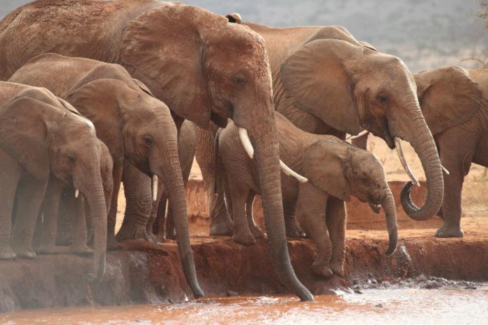 elephants landing page