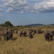Statement welcoming UK ivory trade ban
