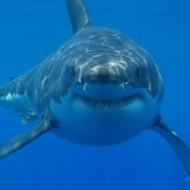 Sharks being pushed towards extinction by Mankind's fears