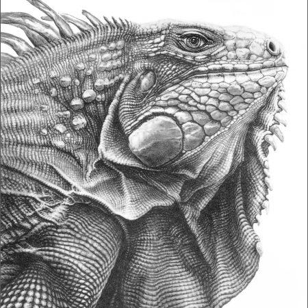 https://eia-international.org/wp-content/uploads/green-iguana_gary_hodges_web.jpg