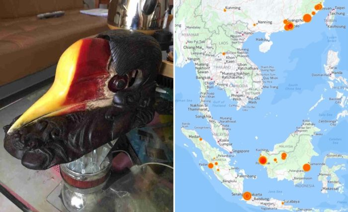 hornbill-illegal-trade-map
