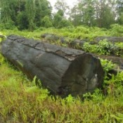 Historic agreement to curb stolen timber