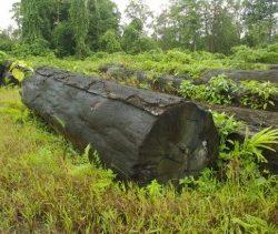 stolen timber