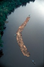 illegal timber raft in river