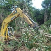 Indonesian logging ban breached on day onel
