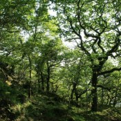 Government back-tracking on England's forests is golden opportunity for better environment