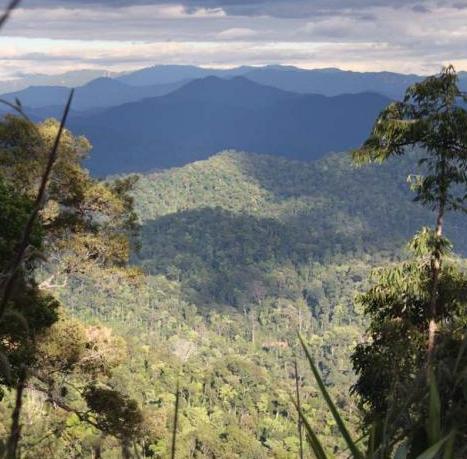 Forest landscape, Attapeu, Laos. Credit EIA.