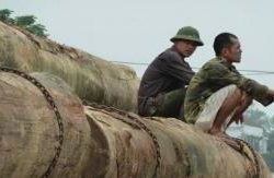 Illegal logging in Mekong.