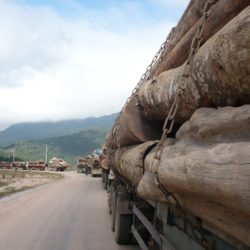 A line of trucks carrying wood trunks