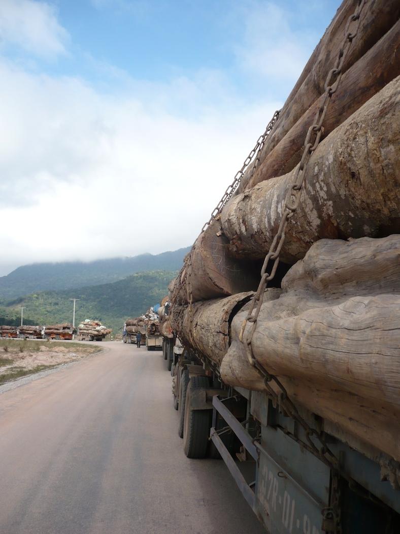 Illegal logging copyright EIA
