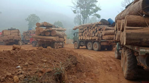Trucks carrying timber, Myanmar