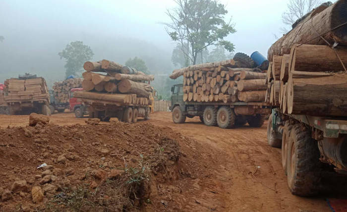 Trucks carrying timber, Myanmar