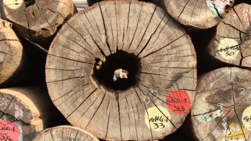 Stockpile of logs, Myanmar