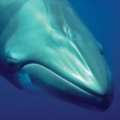 Thanks for an incredible week for whales and dolphins!