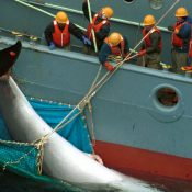 Japan's decision to quit the International Whaling Commission is officially confirmed