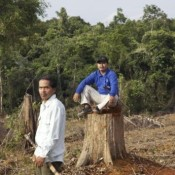 Appeal: Help us save forests from palm oil's bulldozers