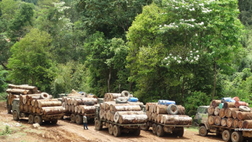 Myanmar log trucks