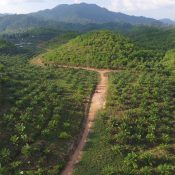 Myanmar palm oil concessions trample on communities, act as a cover for extracting timber
