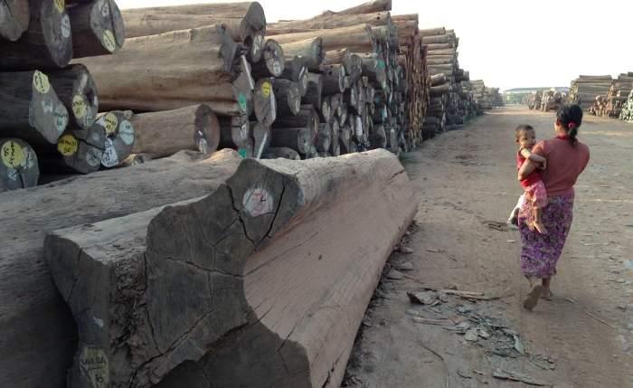 Log yard in Myanmar