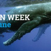 Ocean Week: Dive into the big blue for an in-depth look at our campaign work