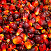 Enforcement & monitoring needed in palm oil sector