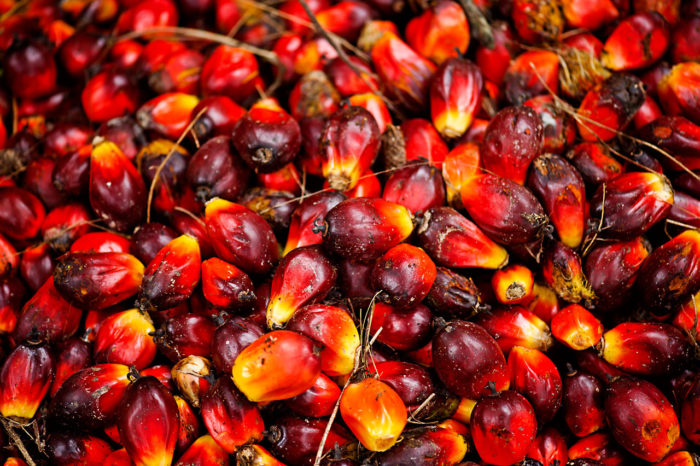 Oil palm fruits, Indonesia