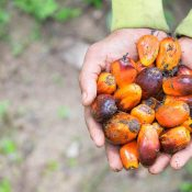 Sustainability must be the norm in Europe to ensure palm oil and other commodities do not destroy forests